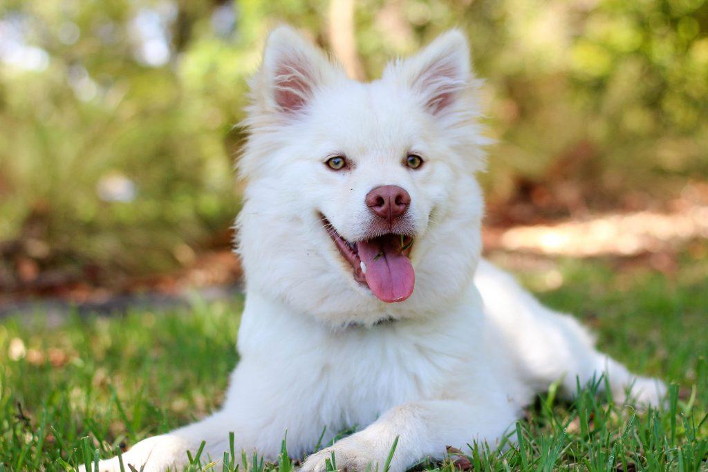 Happy dog happiness score