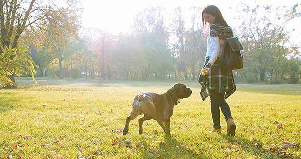 Chicago's best dog parks