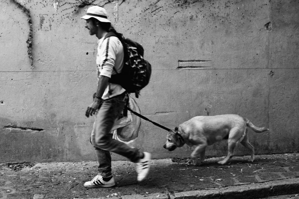 Contractor Dog walking