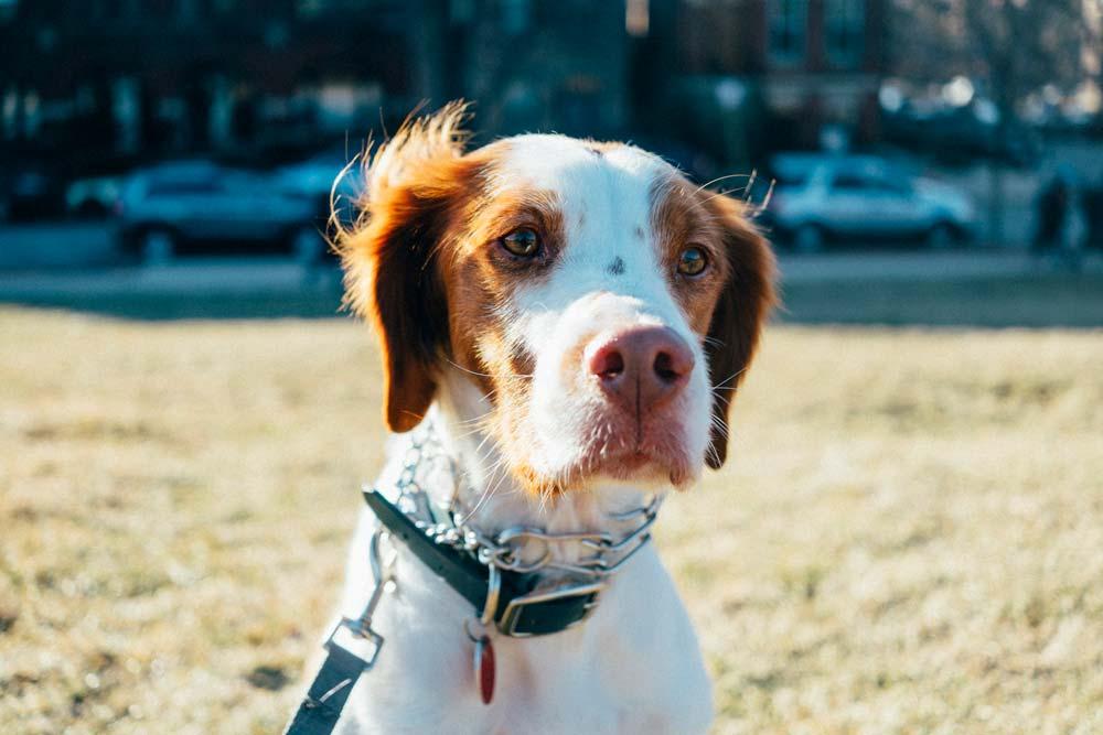 Dog Field Trips - Chicago