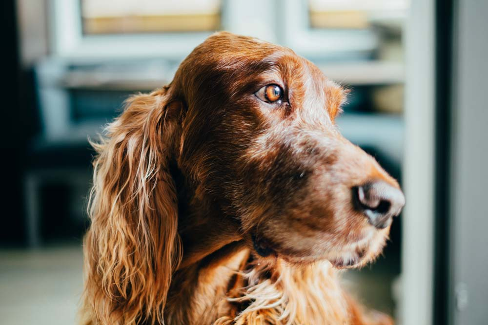 Weekly Dog Walking Packages - GPS Tracking