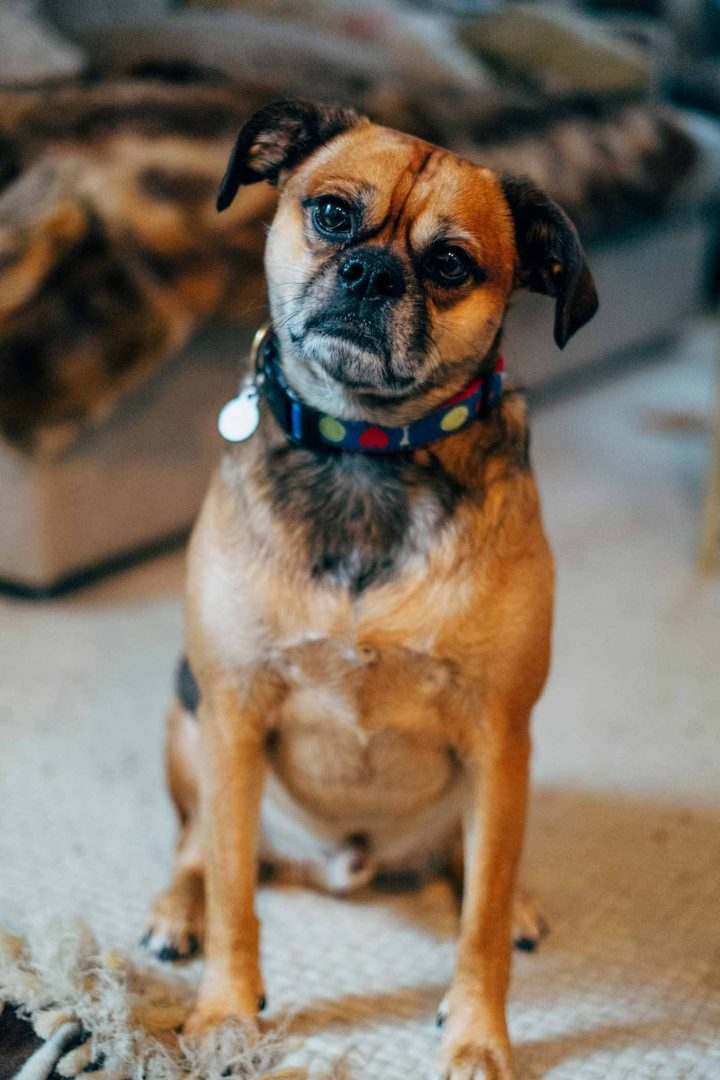 Dog Walking Services - Chicago