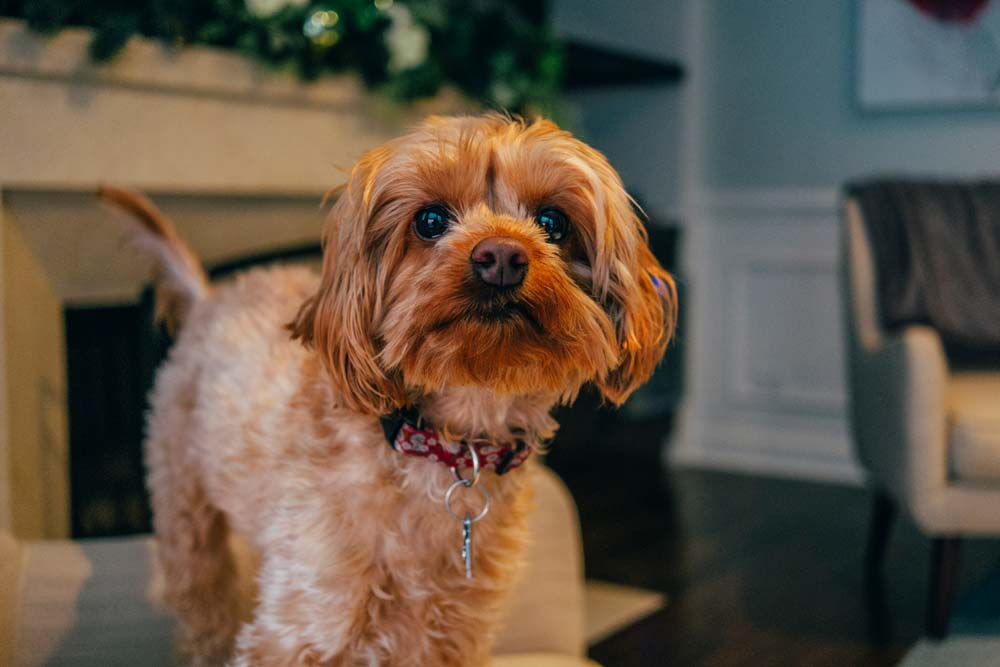 Hourly Pet Sitting Services in Chicagoland