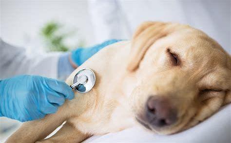 Emergencies Dog